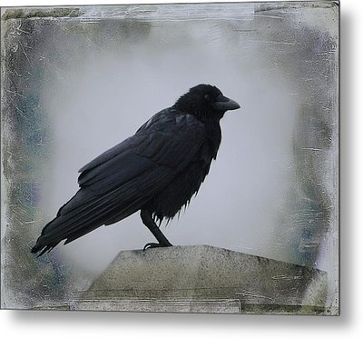 Wet Bird Metal Print by Gothicrow Images