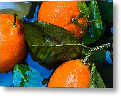 Wet Tangerines Metal Print by Alexander Senin