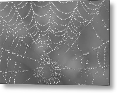 Wet Web Metal Print by Kimberly Oegerle