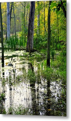 Wetlands Metal Print by Frozen in Time Fine Art Photography