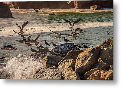 Whalers Cove Birds Metal Print by Mike Penney