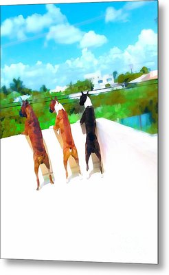 What's Out There  Metal Print by Javier Correa