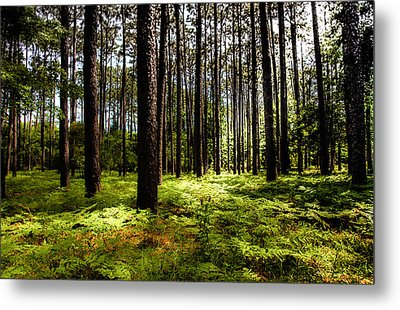 When The Forest Beckons Metal Print by Karen Wiles