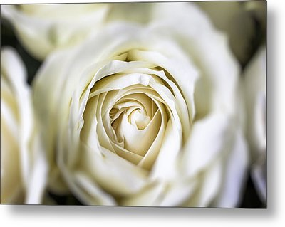 Whie Rose Softly Metal Print by Garry Gay