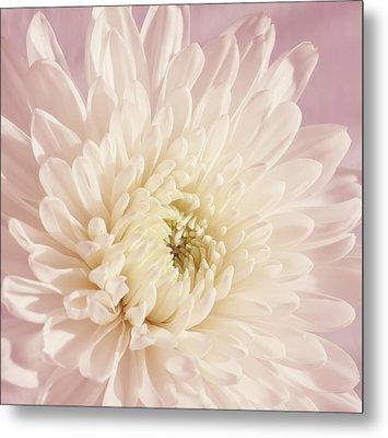 Whispering White Floral Metal Print by Kim Hojnacki