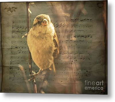 Whistling Song Sparrow Metal Print by Janice Rae Pariza