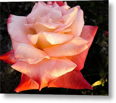 White And Peach Metal Print by Zina Stromberg