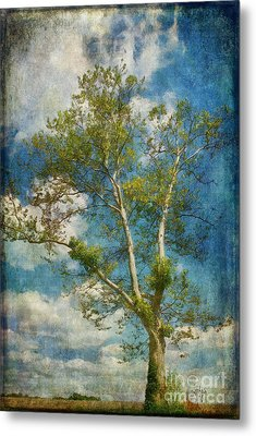 White Birch In May Metal Print by Lois Bryan