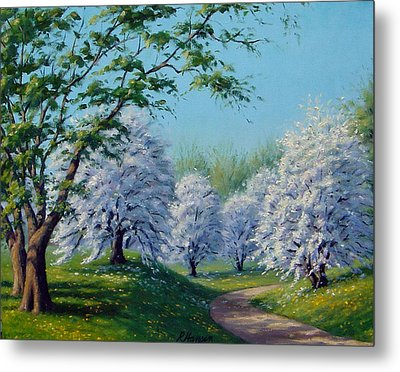 White Blossoms Metal Print by Rick Hansen