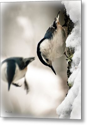 White Breasted Nuthatch In The Snow Metal Print by Bob Orsillo