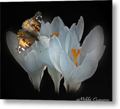 White Crocus With Monarch Butterfly Metal Print by Mikki Cucuzzo
