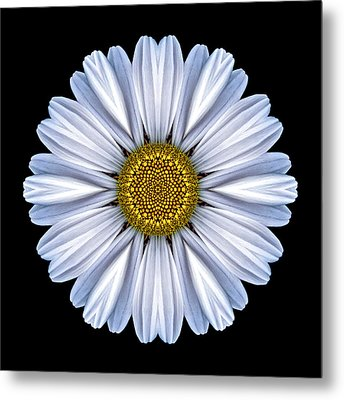 White Daisy Flower Mandala Metal Print by David J Bookbinder