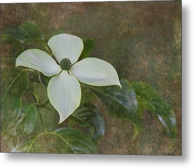 White Dogwood Metal Print by Angie Vogel