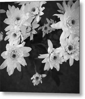 White Flowers- Black And White Photography Metal Print by Linda Woods