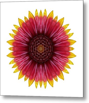 Galliardia Arizona Sun I Flower Mandala White Metal Print by David J Bookbinder