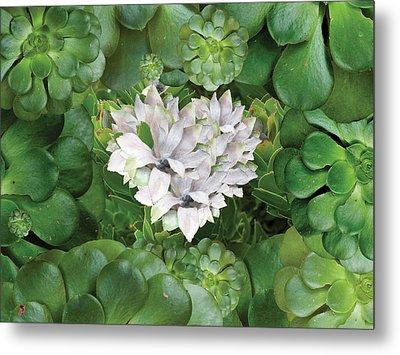 White Green Flower Metal Print by Alixandra Mullins
