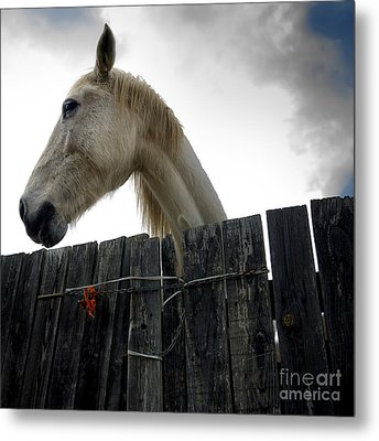 White Horse Metal Print by Bernard Jaubert