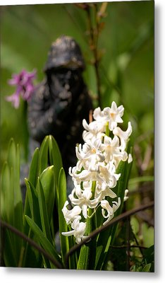 White Hyacinth In The Garden Metal Print by  Onyonet  Photo Studios