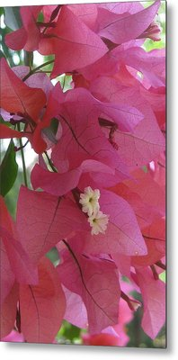 White In Pink Metal Print by Russell Smidt