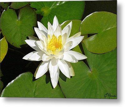 White Lotus Metal Print by Ellen Henneke