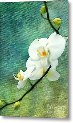 White Orchids Metal Print by Darren Fisher