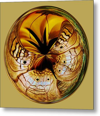 White Peacock Butterfly Orb Metal Print by Paulette Thomas