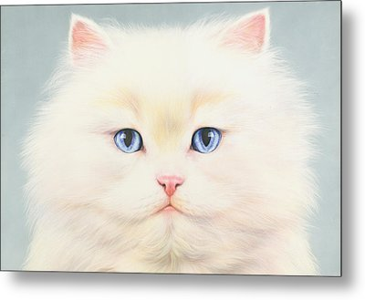 White Persian Metal Print by Andrew Farley