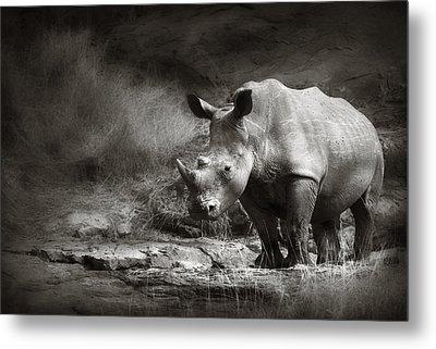 White Rhinoceros Metal Print by Johan Swanepoel