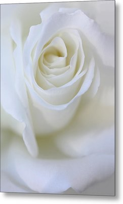 White Rose Floral Whispers Metal Print by Jennie Marie Schell