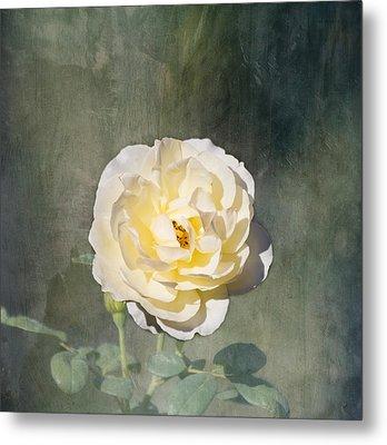 White Rose Metal Print by Kim Hojnacki