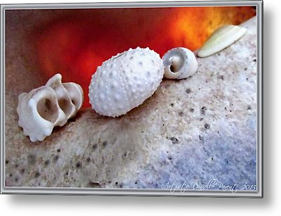 White Seashells And Purple Conch  Metal Print by Danielle  Parent