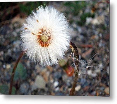 White Spring Wildflower Metal Print by Patricia Januszkiewicz