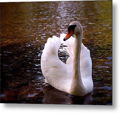 White Swan Metal Print by Rona Black