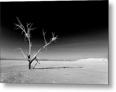 White Tree Metal Print by Peter Tellone