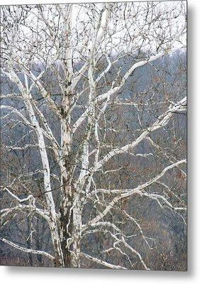 White Tree Metal Print by Todd Sherlock