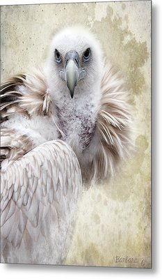 White Vulture  Metal Print by Barbara Orenya