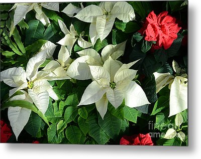 White With Red Metal Print by Kathleen Struckle