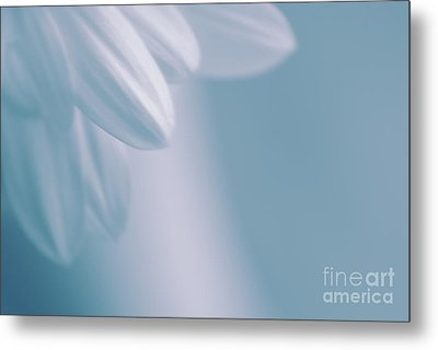 Whiteness 02 Metal Print by Aimelle