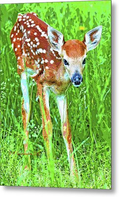 Metal Print featuring the photograph Whitetailed Deer Fawn Digital Image by A Gurmankin