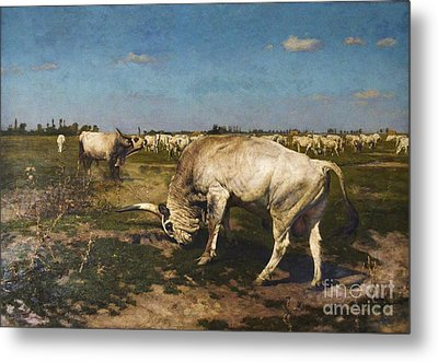 Who Is The Herd Boss Metal Print by Pg Reproductions