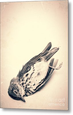 Who Killed Cock Robin Metal Print by Edward Fielding