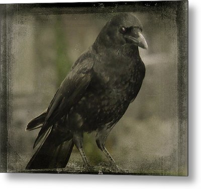 Who Loves You Baby Metal Print by Gothicrow Images