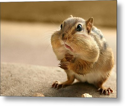 Who Me Metal Print by Lori Deiter