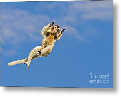 Who Needs Wings? Metal Print by Ashley Vincent