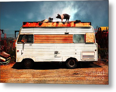 Wilbur The Pig Goes On Vacation 5d22705 Metal Print by Wingsdomain Art and Photography