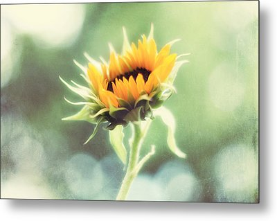 Wild And Free Metal Print by Amy Tyler
