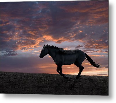 Wild And Free Metal Print by Leland D Howard