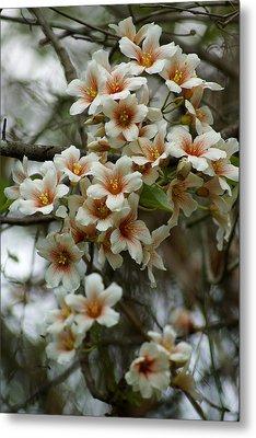 Wild Flowering Beauty Metal Print by Kim Pate
