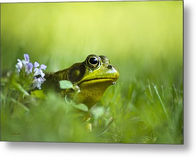 Wild Green Frog Metal Print by Christina Rollo