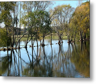 Wild Life In The Marshlands. Metal Print by Joyce Woodhouse